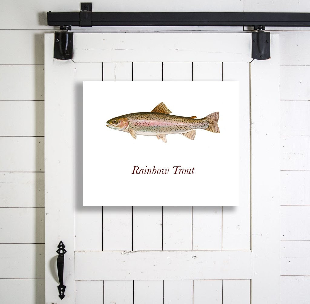 Rainbow Trout Shower Curtain Shower Curtain with regard to measurements 1024 X 1005