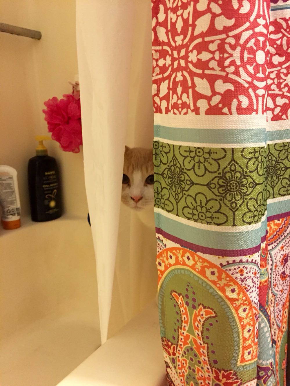 When You Go To Take A Shower And Your Cat Scares The Shit Out Of for sizing 1000 X 1334